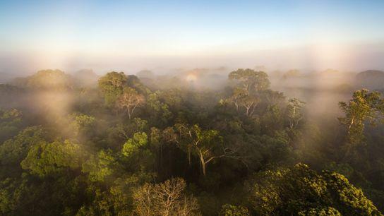 Floresta amazônica não está mais armazenando carbono para nosso planeta, aponta novo estudo. Em vez disso, ...