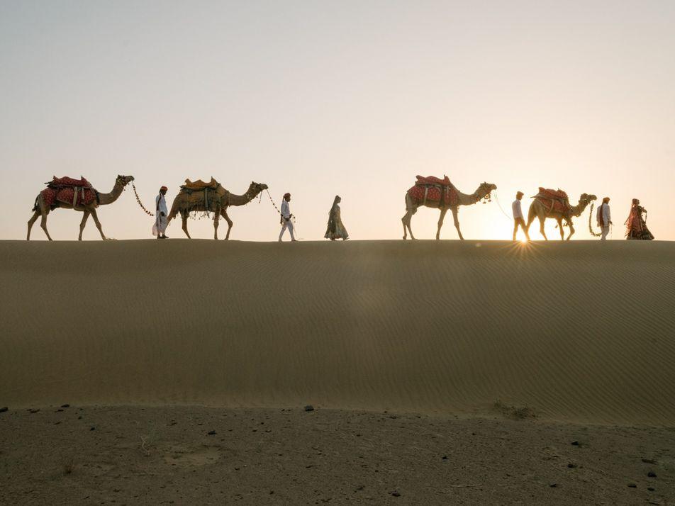 Camelos estão desaparecendo na Índia, ameaçando cultura nômade secular