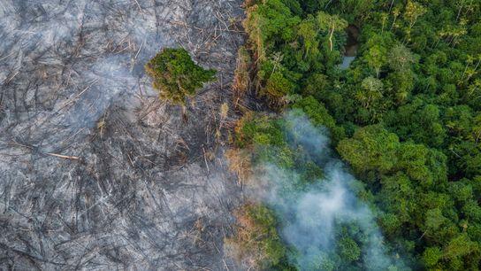 queimada amazonia