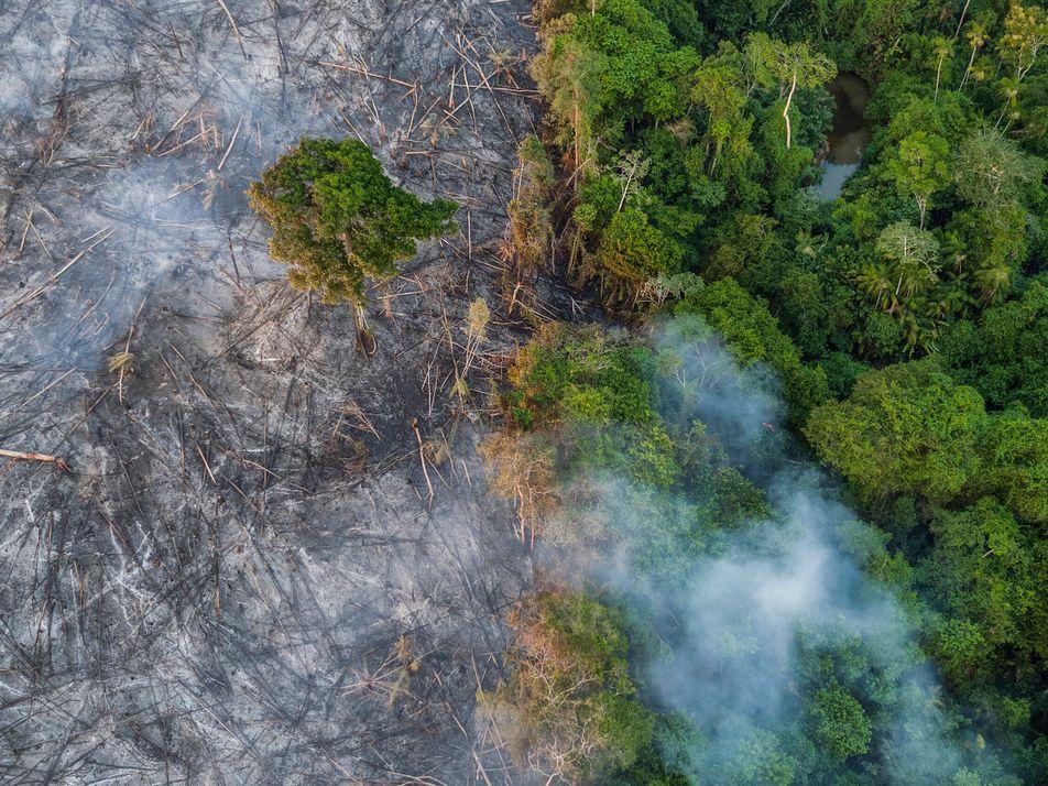 Antonio Nobre: O planeta está enfermo – é preciso 'reajardiná-lo'