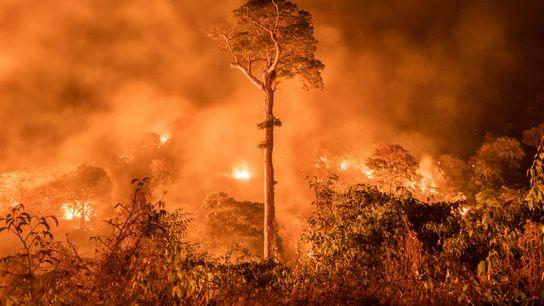 queimada na floresta amazônica Maranhão