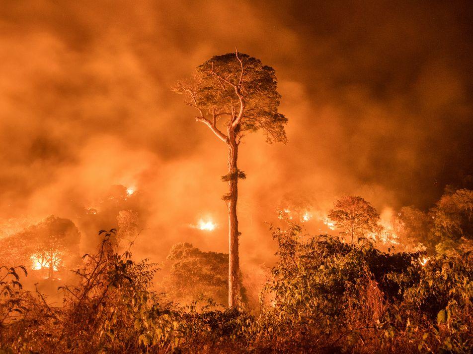 Queimadas e desmatamento estão transformando Amazônia em fonte de carbono, diz estudo