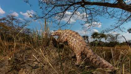 Apreensão de animais silvestres diminui, mas comércio ilegal deve se intensificar em breve