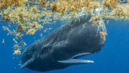 Desequilíbrio dos oceanos é, ao mesmo tempo, causa e efeito da crise climática