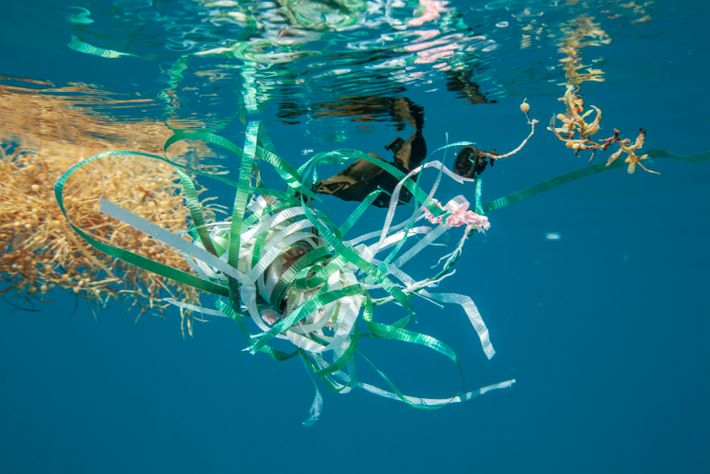 Lixo plástico no Mar de Sargaços, no Atlântico Norte. A semelhança entre certos itens, que levam séculos ...