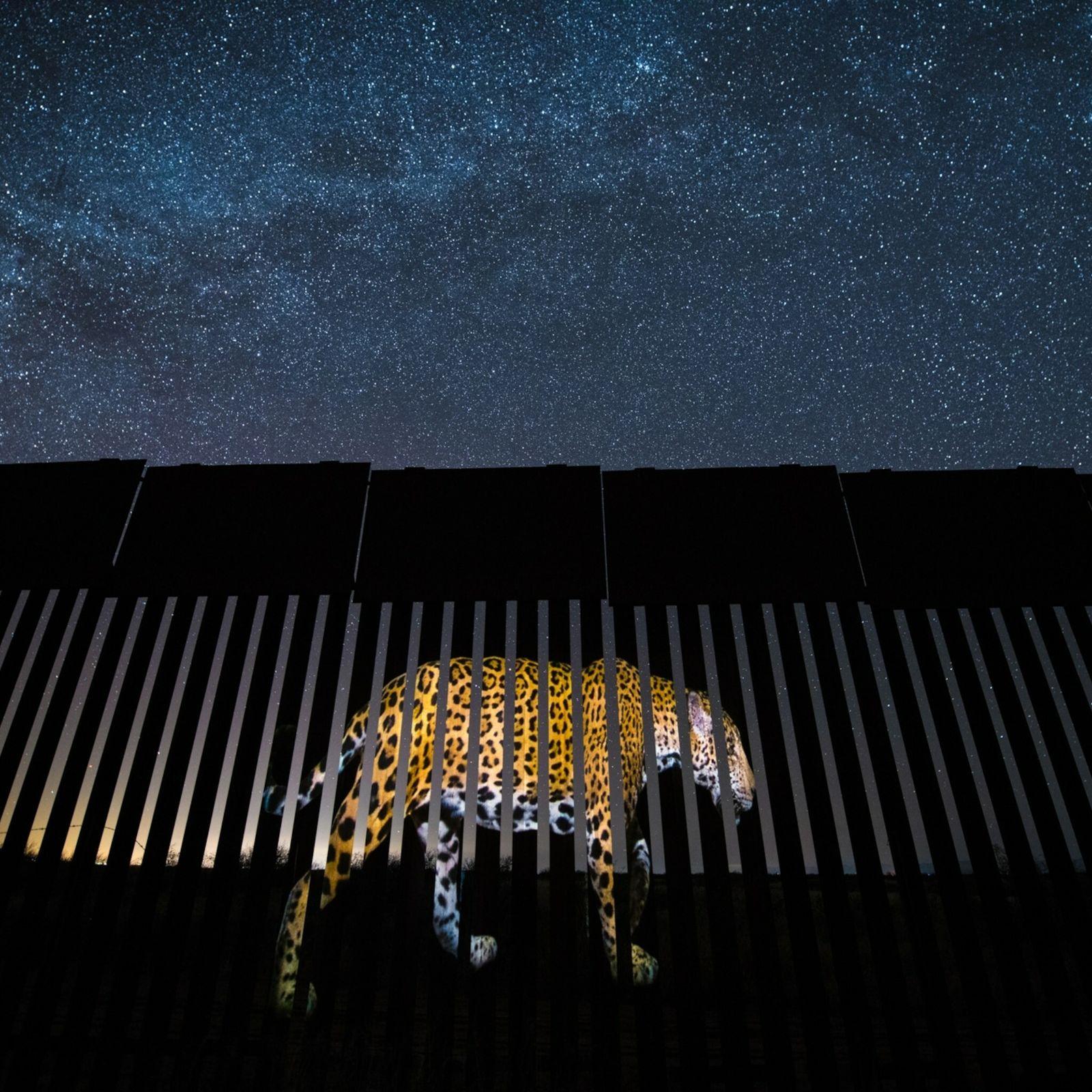 jaguar-border