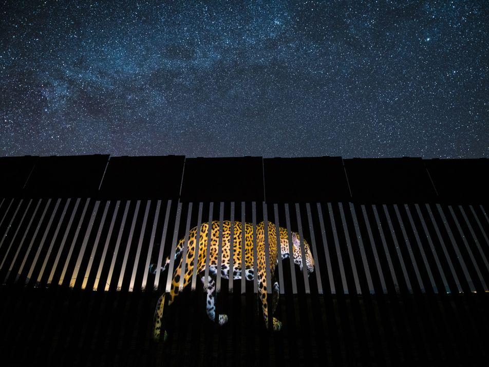 Onça-pintada avistada próximo à fronteira dos EUA com México traz esperança à conservação