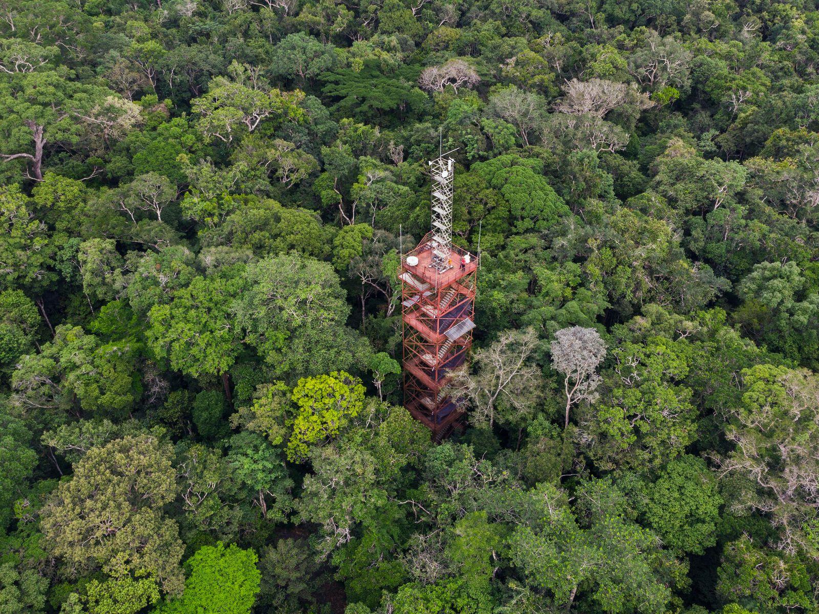 """Torre de observação científica ZF-2, próximo a Manaus, no Amazonas. """"O aumento da temperatura e a ..."""