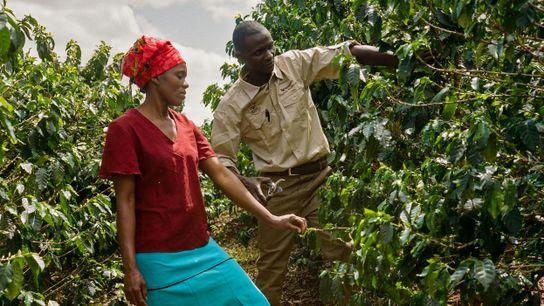 Os agrônomos da Nespresso oferecem aulas práticas no campo simulando situações reais, de maneira que os ...