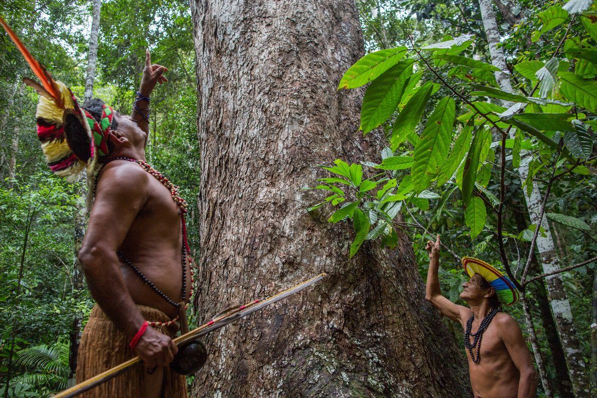 Jenipapo Pataxó e Putumuju Pataxó observam um jequitibá centenário no Parque Nacional e Histórico do Monte ...