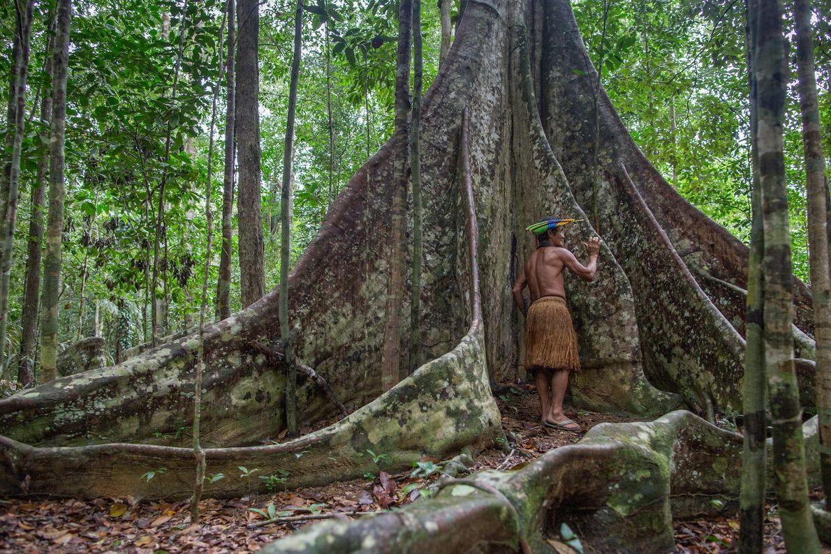 Putumuju Pataxó usa a a raíz de uma sumaúma centenária para emitir sons e se comunicar ...