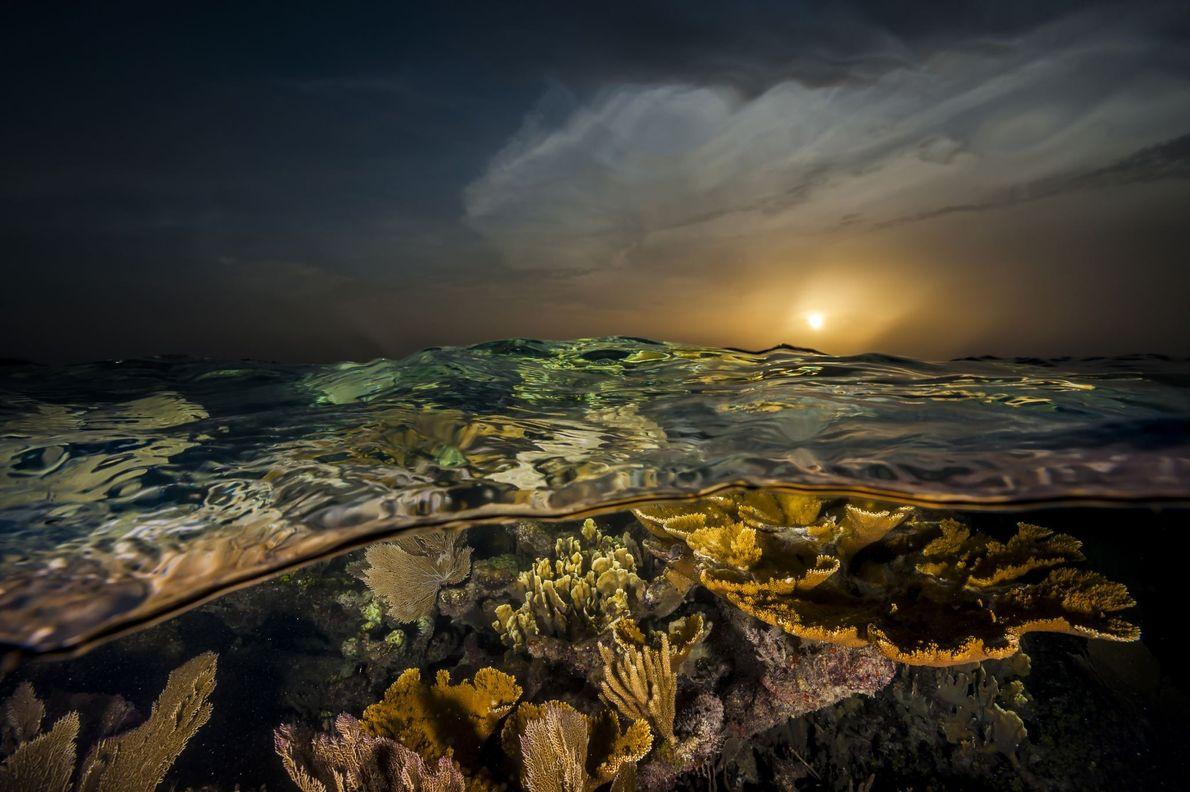 Corais debaixo do mar