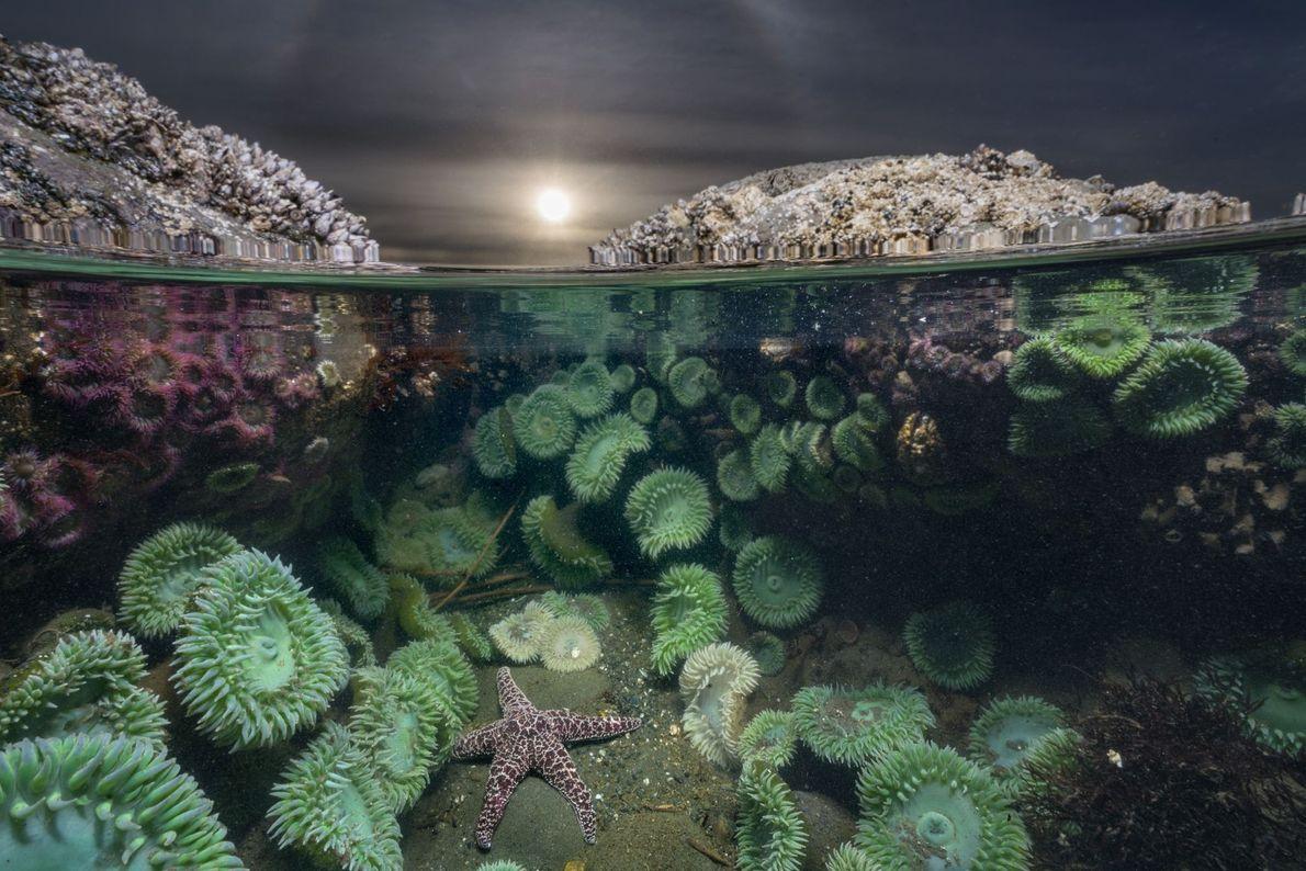 Estrela-do-mar no oceano