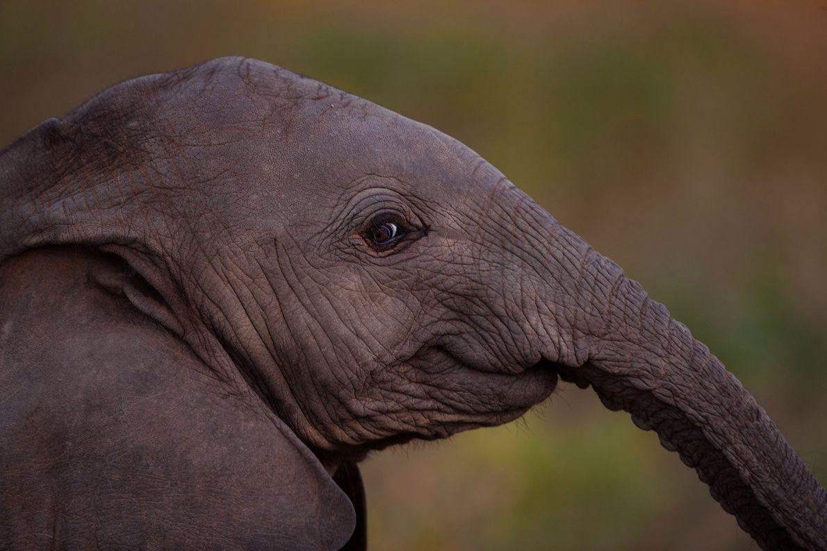 elefantes-nichols