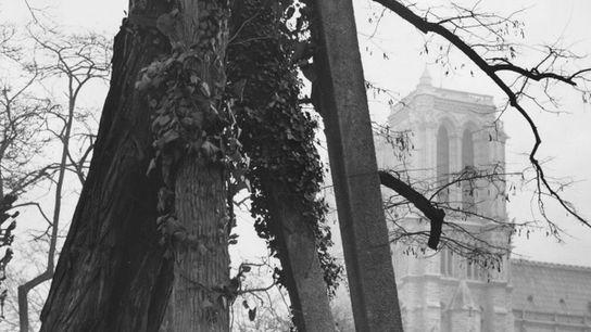 Pilar de concreto sustenta uma acácia-falsa (Robinia pseudoacacia), a árvore mais antiga de Paris, na Praça ...
