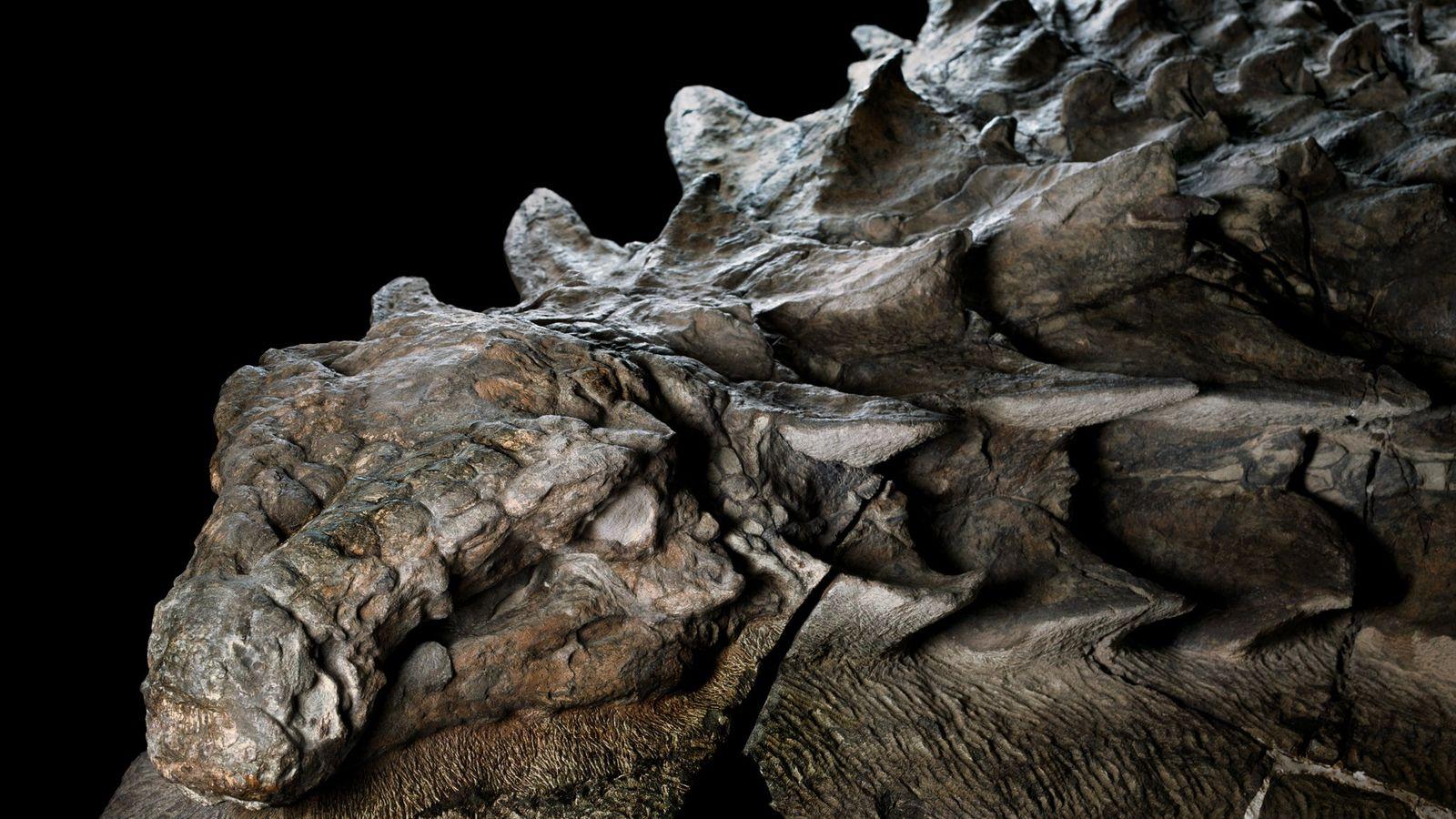 Descoberta sensacional de fossil de dinossauro