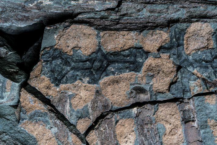 No tronco do nodossauro, costelas de cor marrom estão próximas dos osteodermos de tom castanho e ...