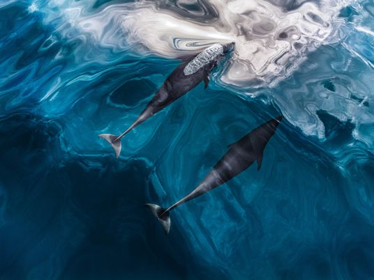 Veja como funciona a ecolocalização – o sonar inerente da natureza