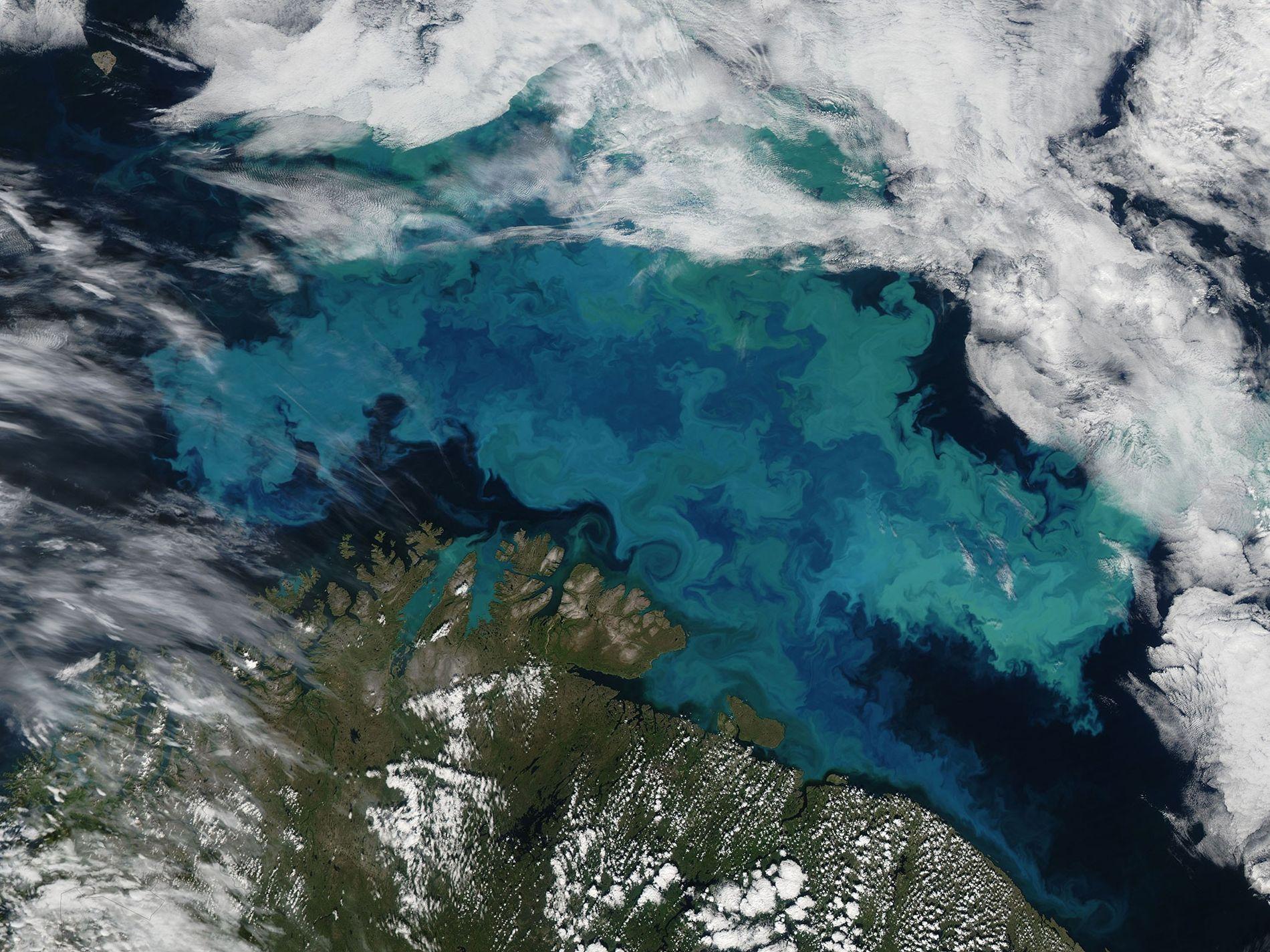 Fitoplâncton em florescimento no mar de Barents, em 14 de agosto de 2011. Essa imagem foi ...