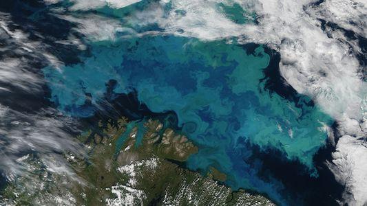 Mudanças climáticas irão alterar a cor dos oceanos