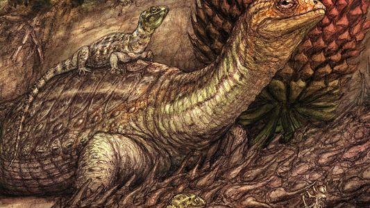 Em caso raro, câncer é descoberto em perna fossilizada de tartaruga