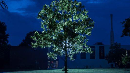 Árvores que estiveram no espaço em 1971 vivem atualmente na Terra