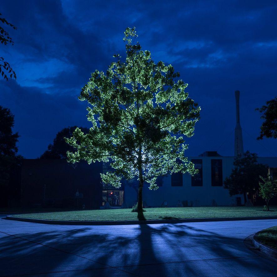 Uma frondosa árvore da Lua iluminada por trás por luzes artificiais, no Centro de Voos Espaciais ...