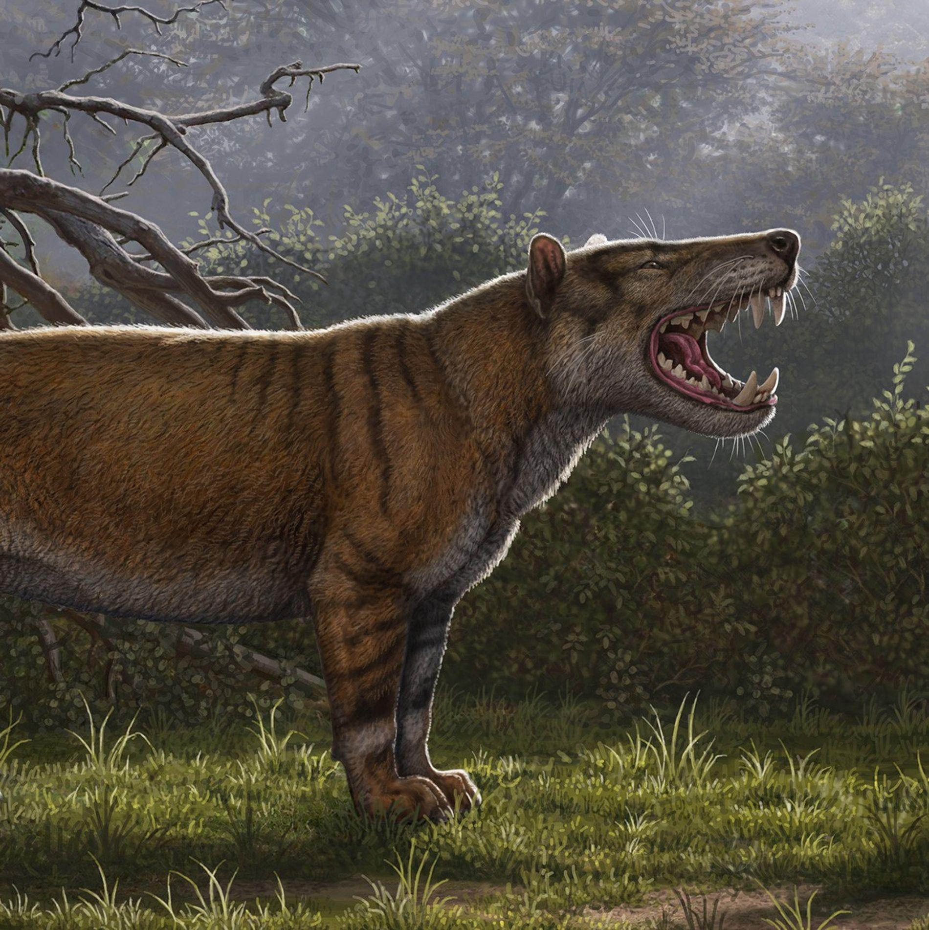 Simbakubwa kutokaafrika, um carnívoro gigante conhecido em grande parte por sua mandíbula, partes do crânio e ...