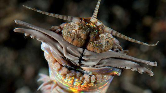 Gigantes vermes predadores vivem sob o solo marinho há mais de 20 milhões de anos, revelam ...