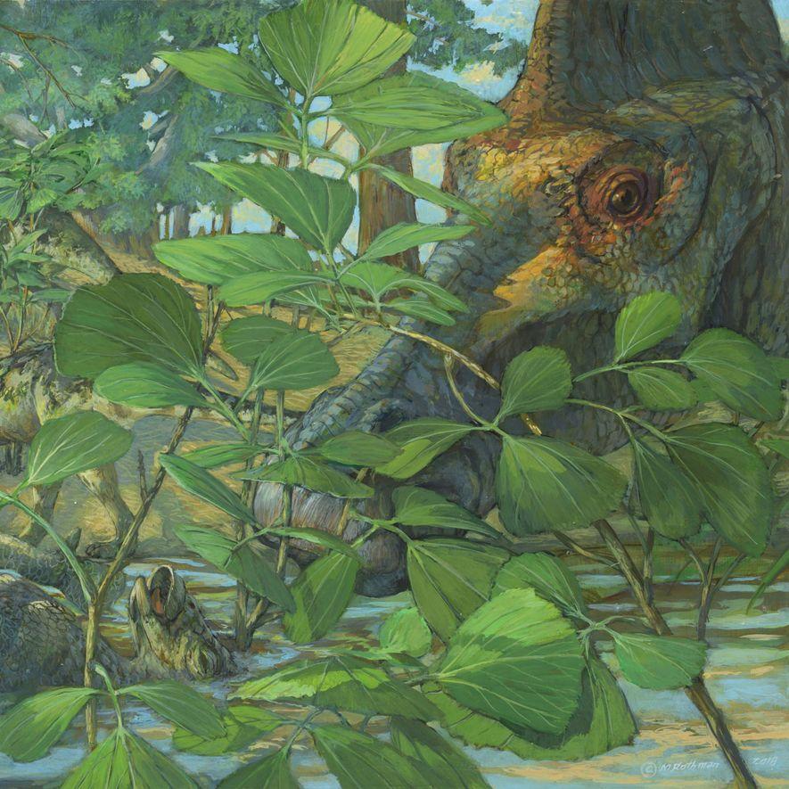 Há mais de 70 milhões de anos, o Hypacrosaurus stebingeri, um hadrossauro herbívoro, habitava o local ...
