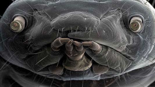 O mundo oculto da vida microscópica revelado em fotos extraordinárias