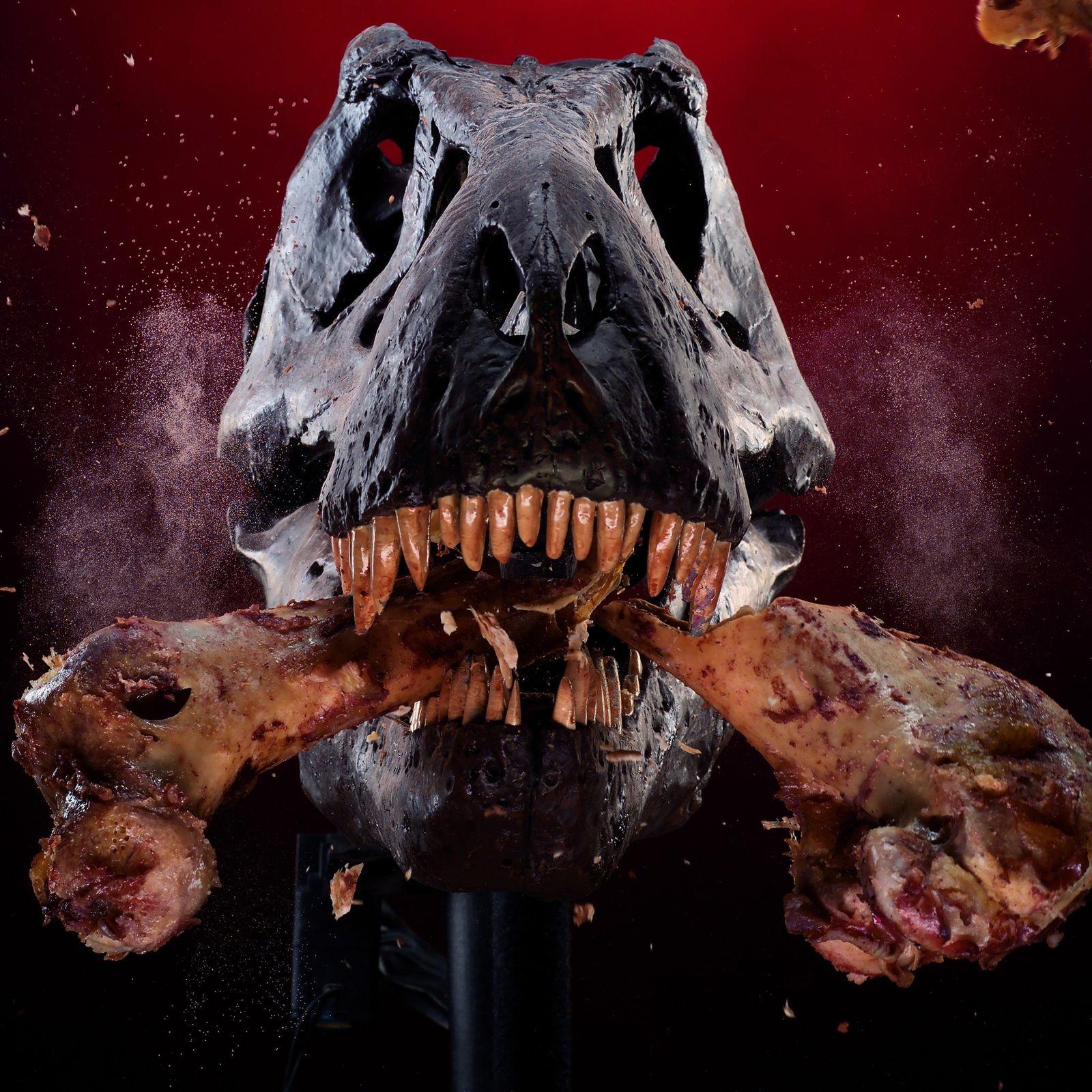 Um crânio mecânico de T. rex quebra um osso como parte de um estudo de sua ...