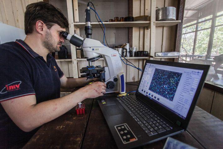 Pedro Nacib Jorge Neto analisa amostras coletadas em campo na cozinha do alojamento cedido aos pesquisadores ...