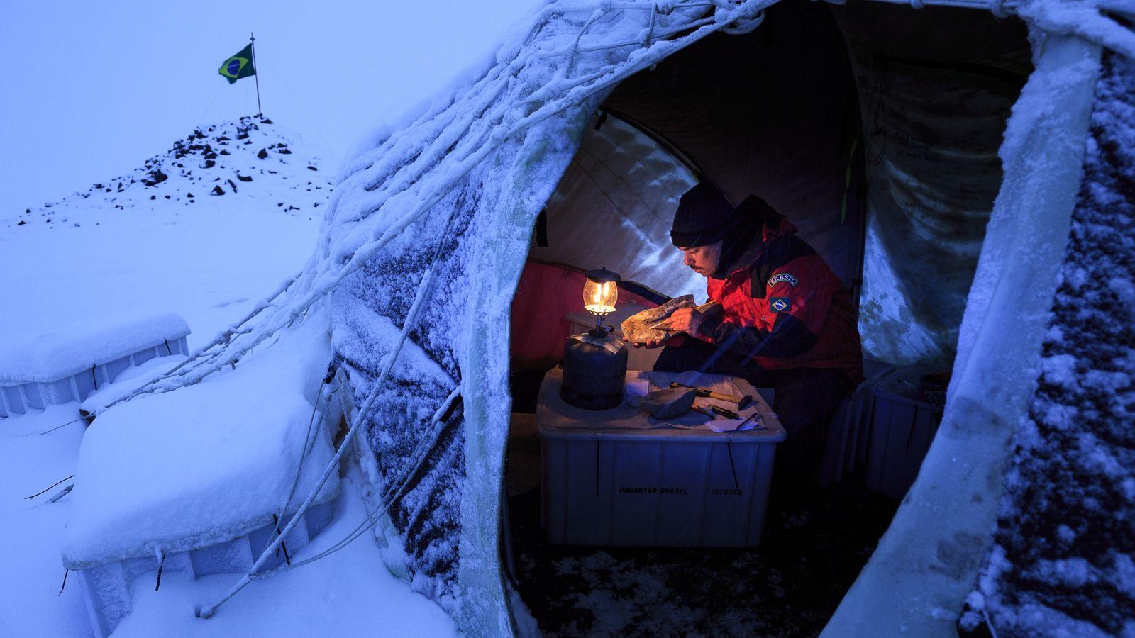 paleontologia antartida
