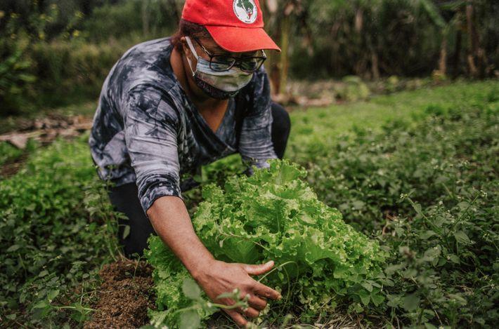 Joselene Araújo Santana planta hortaliças, cana-de-açúcar, feijão, entre outros produtos.