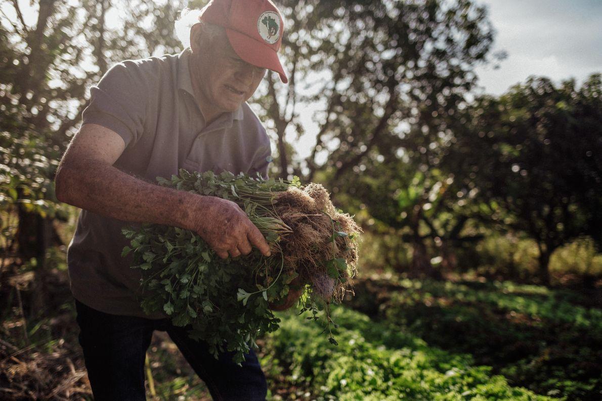 Antônio Marques da Silva planta verduras, frutas e hortaliças no assentamento Dom Tomás Balduino, municipio de ...