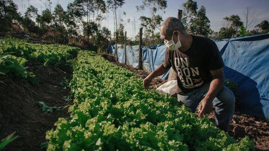 José Carlos Pereira Pires produz verduras e hortaliças no assentamento Dom Tomás Balduíno, no município de ...