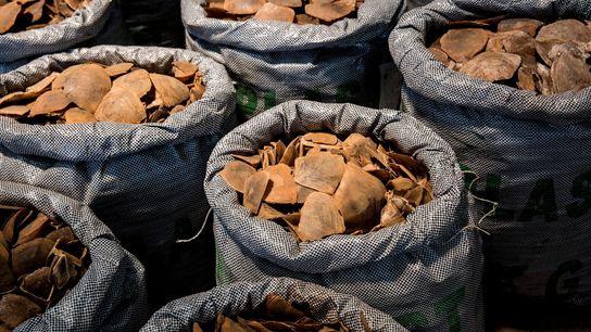 Mais de 128 toneladas de carne e escamas de pangolins foram interceptadas em todo o mundo ...