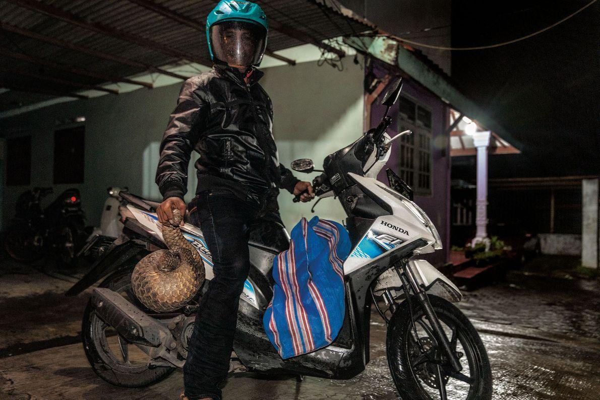 Um caçador de uma vila na Indonésia afirma que entrega semanalmente pangolins na cidade de Surabaya. ...