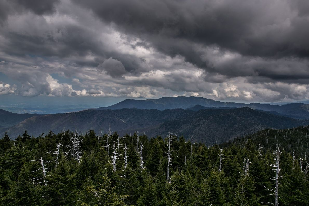 CLINGMANS DOME, CAROLINA DO NORTE E TENNESSEE No ponto mais alto da Trilha Apalache, a visibilidade pode …