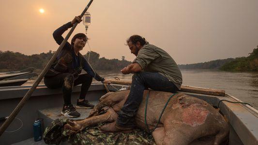 Fogo no Pantanal: imagens escancaram a agonia da vida selvagem na região