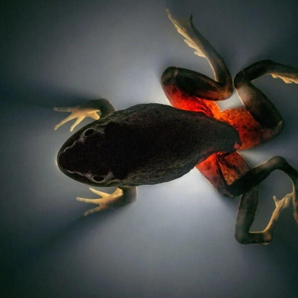 Os parasitas estão entrando em extinção. Descubra por que é preciso salvá-los