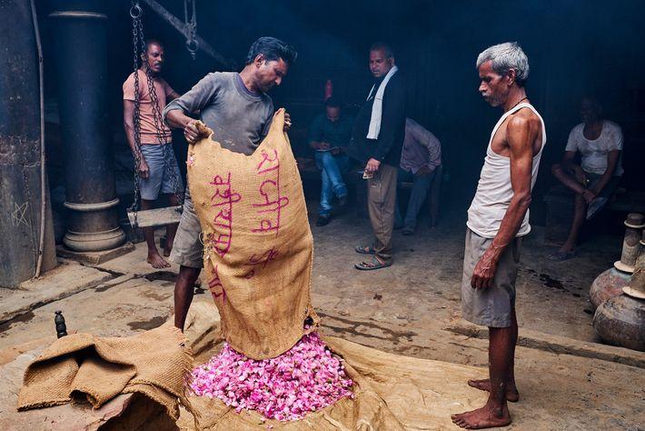 Saco de rosas sendo entregue na fábrica da M.L. Ramnarain Perfumers, uma das cerca de 350 ...