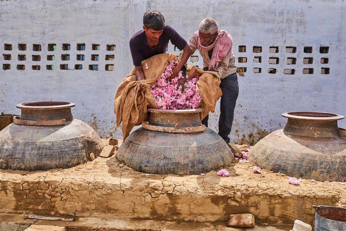 Perfumeiros jogam pétalas em um alambique de cobre. Antes de apertar a tampa, o aro é ...