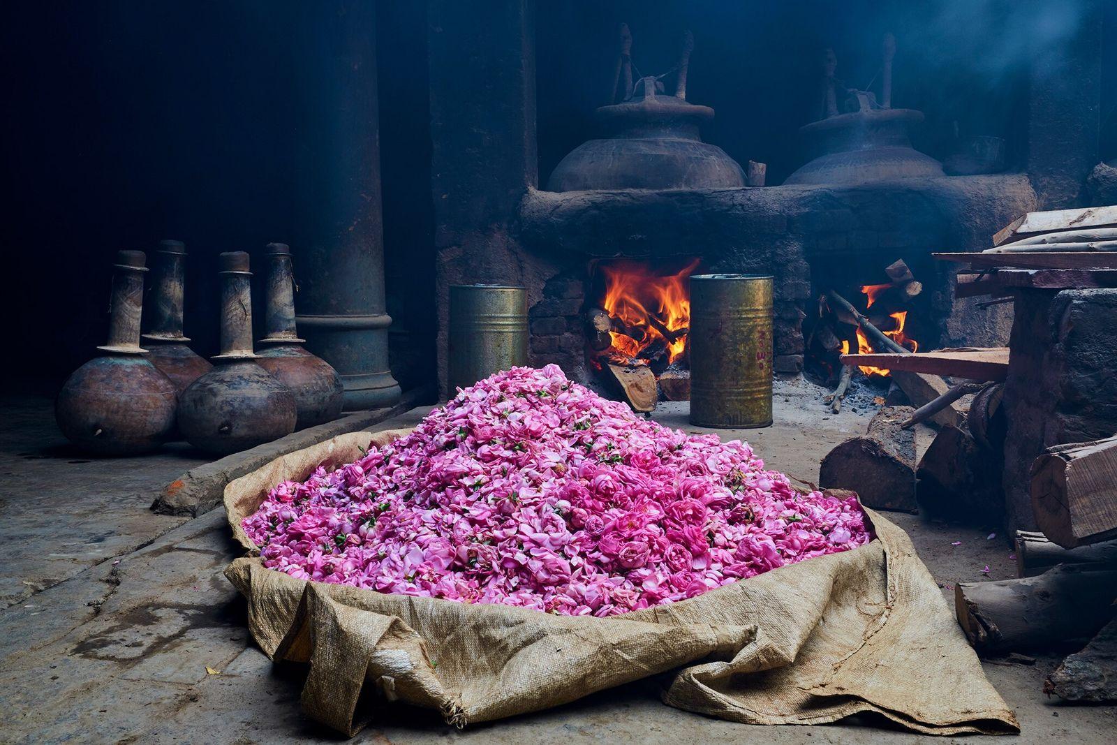Rodeadas por alambiques e vasos de cobre, rosas recém colhidas são preparadas para virar óleo essencial ...