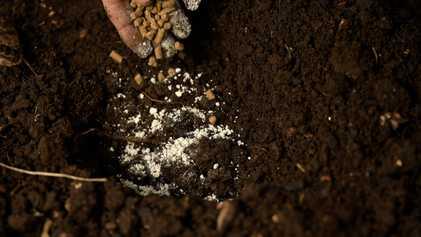 Produtores rurais estão diante de uma crise de fósforo e a solução começa pelo solo