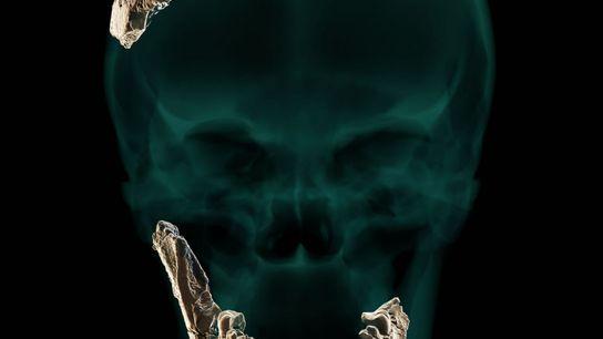 Pesquisadores utilizaram os escassos restos do crânio encontrados em Nesher Ramla para recriar virtualmente um hominíneo ...