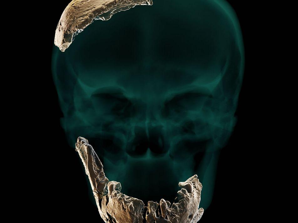 Crânio intrigante pode revelar ancestral humano desconhecido