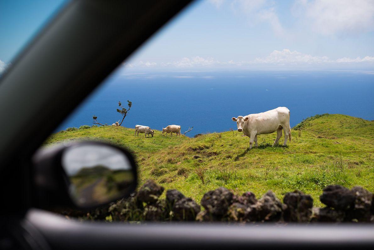 Pico, Azores, Portugal