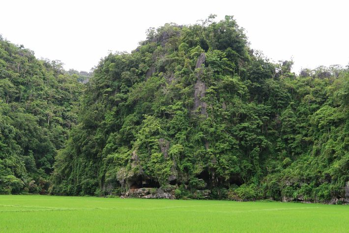 Leang Tedongnge, a caverna onde a pintura rupestre foi encontrada, fica à beira de um vale exuberante, ...